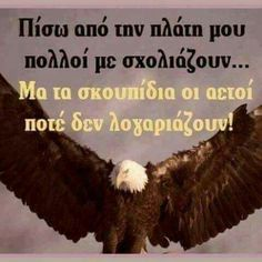 Bald Eagle, Life Is Good, Life Is Beautiful