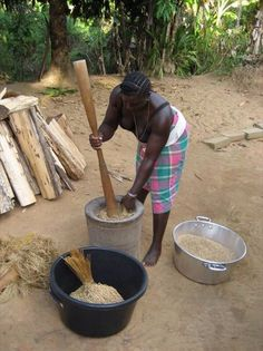 Rijst bereidin in het binnenland van Suriname
