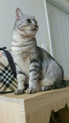 #하울이 #고양이 #찹쌀떡 숨은 #구름이 #냥스타그램 #고양이스타그램 #catstagram #instacat