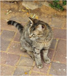 Gurit,a cat that was living near my home