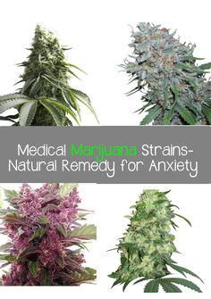 Top 4 Medical Marijuana Strains-Natural Remedy for Anxiety - Marijuana Recipes