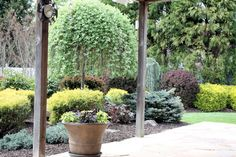 I want to put a garden bed like this one between the patio and the lawn. Plus, I haven't considered a weeping tree for the backyard - like the idea.