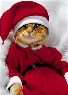 Cat in Santa Suit - Avanti Holiday Card
