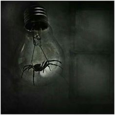Most Conceptual and Terrific Dark Art Photos Dark Art Photography, Photography Gallery, Spider Light, Light Bulb Art, Spider Art, Fake Spider, Inside Art, Beautiful Dark Art, Gothic Culture