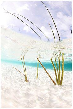 "Chris Leidy Photography: Open Water ""Glass Fern"" Website: www.leidyimages.com #Ocean #photography #water #ChristopherLeidy"