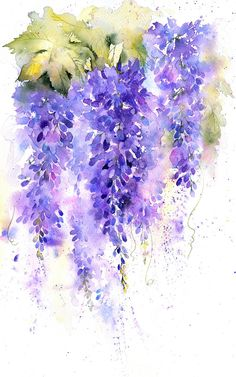 This is a downloadable PDF document which will guide you step by step to produce your own lovely, loosely painted wisteria in watercolour. Included is a full list of the paints and paper used as well as colour illustrations to each step. I have over 25 years experience in teaching
