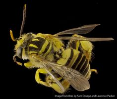 I'm ready for my close-up! A new book brims with stunning bee portraits.