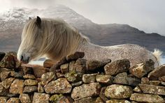 Horse, Shieldaig, Northern Highlands, Scotland by Steve Carter