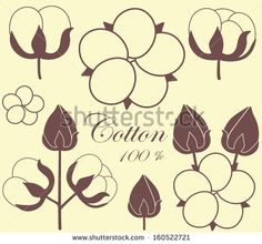Cotton boll Stock Photos, Illustrations, and Vector Art
