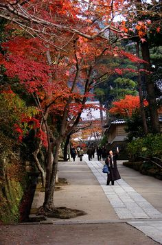 Engakuji, Kamakura Autumn at one of the best temples in Kamakura, near Tokyo… Places To Travel, Places To Visit, Japanese Lifestyle, Go To Japan, Tokyo Travel, Kamakura, Places Around The World, Amazing Nature, Nice View