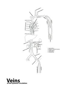Learn the cranial nerves with this coloring worksheet
