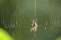 #Naturaleza #biodiversidad en#Asturias #Arañas en nuestro Jardin de #Casa Ines