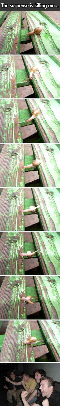 Parkour snail // funny pictures - funny photos - funny images - funny pics - funny quotes - #lol #humor #funnypictures