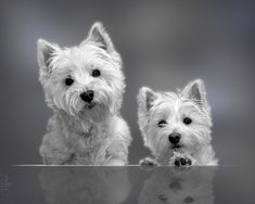 Double adorableness. These are my absolute favourite type of dog