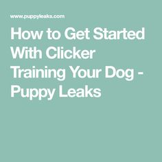 How to Get Started With Clicker Training Your Dog - Puppy Leaks