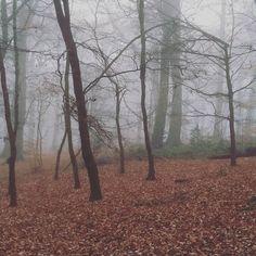 Taken by www.head4space.com