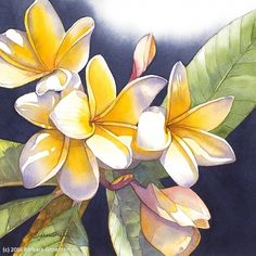 Passion for Plumeria #1 by Barbara Groenteman Watercolor ~ x