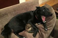 This Dog Comforting His Cat During A Storm Is The Good You Need Today: Dogs are just Awesome!