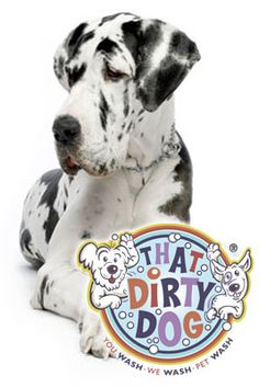 48 best dog store images on pinterest grooming salon dog store take your dog or someone else s to a do it yourself doggie wash solutioingenieria Images