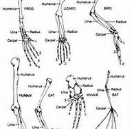 rat skeleton diagram bing images chimera pinterest rats rh pinterest com Rat Skeletal System Mouse Skeleton Diagram