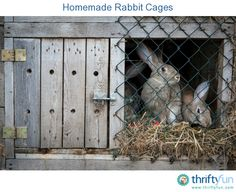 Homemade Rabbit Cages