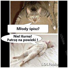 mem z kotami na rano, śmieszne zdjęcia kotów z opisem, fajne teksty, mem z kotem, wesołe, fajne, zabawne, humor z kotkami - kliknij po więcej! Very Funny Memes, Love Memes, Wtf Funny, Funny Cats, Funny Animals, Meme Comics, Just Smile, Man Humor, Animal Memes