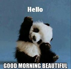 For those who know me well, they know I can't handle the cuteness of baby animals. So when I saw a baby panda picture that was happy about it being Friday, I had to post it. It's Friday. It's a 3 day weekend. Today is a good day. Enjoy the little things. Happy Friday Quotes, Weekend Quotes, Happy Quotes, Funny Friday, Friday Memes, Happiness Quotes, Morning Quotes, Morning Memes, Friday Sayings