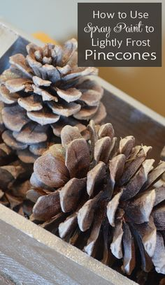 How to Use Spray Paint to Lightly Frost Pinecones - Decor Idea