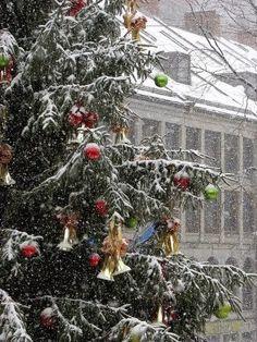 White Christmas in Massachusetts