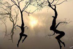 'Dancing Trees' by Igor Zenin