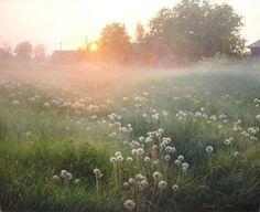 Dandelion Morning, painting by Palachev Vyacheslav