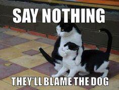 """aahah """"ne dis rien, ils penseront que c'est la faute du chien !""""  It's the Dog fault"""