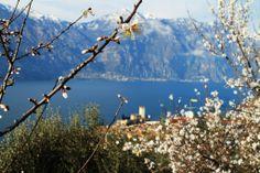 Anche a #Malcesine la #primavera è in arrivo [#foto Sama Subi ] #LagoDiGarda #VisitLagoDiGarda #Veneto #VisitVeneto #TurismoVeneto #GardaVeneto