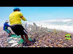 #Pesca De Orilla Con Red - Shore Fishing With Net