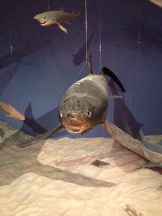 Crap taxidermy - shark