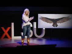 How vultures can help solve crimes | Lauren Pharr - YouTube