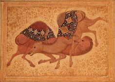 Two Camels Fighting, 1620 Prints by Indian School | Magnolia Box