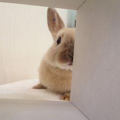 ぼくは見たぞっ❗️❗️ #うさぎ#九州うさぎclub#ネザーランドドワーフ#可愛い#rabbit#bunny#instabunny#cute