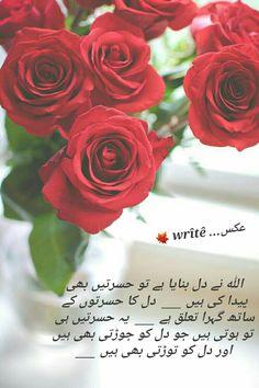 Love Poetry Urdu, Friendship, Thoughts, Rose, Flowers, Plants, Pink, Plant, Roses