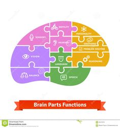 Puzzle Tiled Brain Functions Shilouette With Icons - Download From Over 42 Million High Quality Stock Photos, Images, Vectors. Sign up for FREE today. Image: 63127675