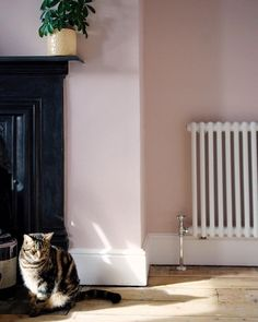 """""""Happiness is pink walls and new radiators"""" - we couldn't agree more Kate! We adore this beautiful combination of walls, sanded back floorboards and a tabby cat. Who else is considering adding one our soothing pinks to their bedrooms? Dusty Pink Bedroom, Pink Bedroom Walls, Pink Bedrooms, Pink Room, Pink Walls, Bedroom Colors, Pink Kitchen Walls, Blush Walls, Bedroom Art"""