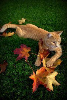 Orange tabby cat - leaves