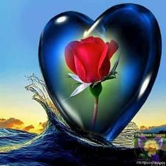 Do not pollute your memory with insults, otherwise there will not be room for the wonderful moments. Heart Pictures, Heart Images, Hearts And Roses, Blue Roses, Heart Wallpaper, Wallpaper Backgrounds, Beautiful Love, Beautiful Flowers, Love You Gif