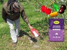 Как ухаживать за черешней весной: подкормка и удобрение, обработка от болезней и вредителей, полив