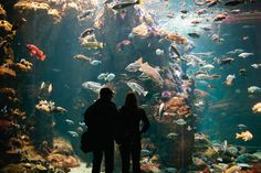 A visit to the California Academy of Sciences