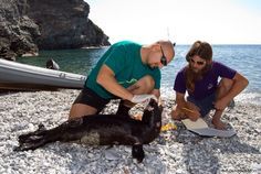 "The Greek-Dutch biologist Dr. Alexandros Karamanlidis, a researcher working with the Hellenic Society for the Study and Protection of the Monk Seal (MOm), has been awarded the Society for Marine Mammalogy ""Conservation Merit"" prize for his work to protect the Mediterranean monk seal."
