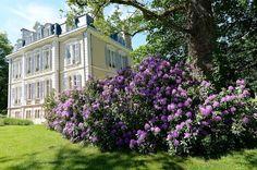 Rhododendrons in the La Creuzette garden