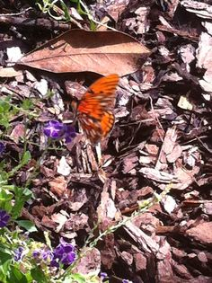 Butterfly visiting.