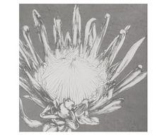 Grey Protea Wall Art - Homeware | Weylandts South Africa