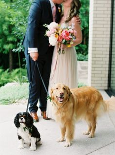 Furry ring bearers at the South Congress Hotel.